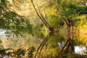 Water en bomen